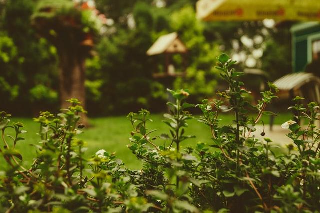 Narzędzia do ogrodu, akcesoria ogrodowe, narzędzia ogrodowe, zestaw ogrodnika, pielęgnacja ogrodu