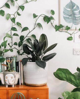 Rośliny ikea, ikea, rośliny, rośliny doniczkowe, kwiaty doniczkowe, sztuczne kwiaty