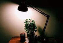 Rośliny domowe